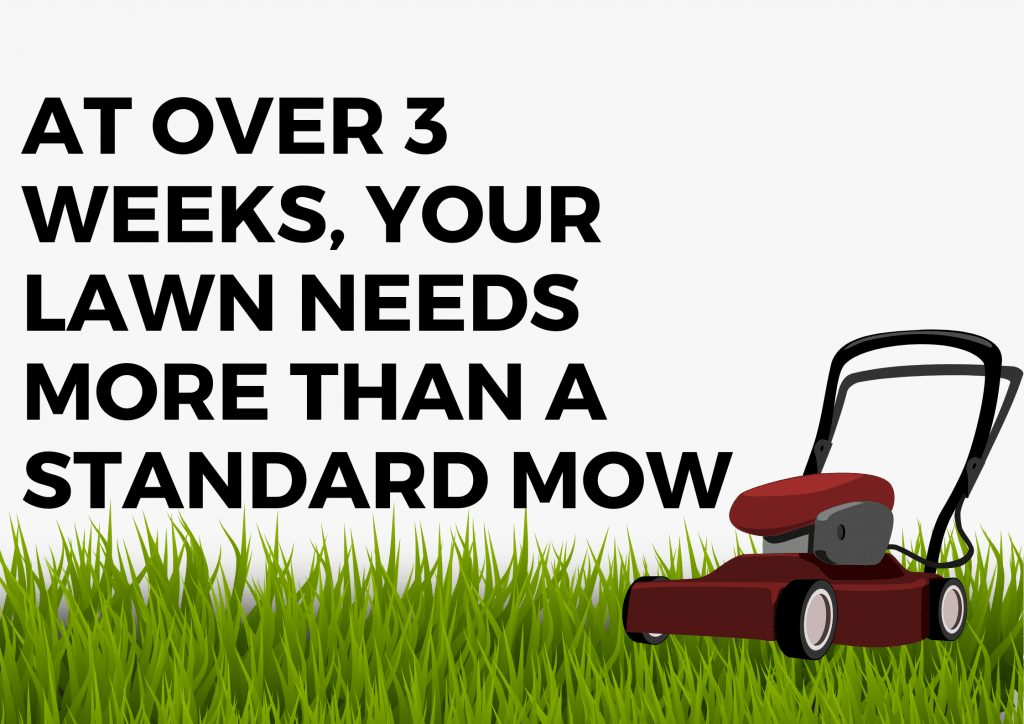 after three weeks your lawn needs more than a standard mow
